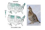 High level of correlation observed for ruffed grouse encounter rate and spatial distribution of societal interest, based on Google Trends [Schuetz & Johnston 2019. PNAS 116:10868-73]; (Photo credit: dfaulder). High level of correlation observed for ruffed grouse encounter rate and spatial distribution of societal interest, based on Google Trends [Schuetz & Johnston 2019. PNAS 116:10868-73]; (Photo credit: dfaulder).